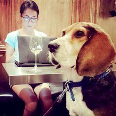 Keep focusing~~~  #yuyuchangchiayu #glasses  #dogs