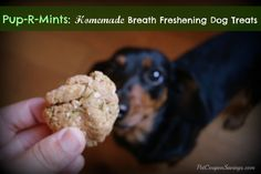 Pup-R-Mints: Homemade Breath Freshening Dog Treats - Pet Coupon Savings