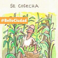 #BelloCiudad #EcoAgrocultura Bellisima, Cities