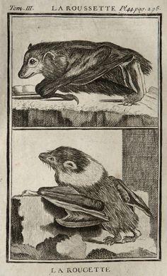 1775 Antique print of BATS by AntiquePrintsOnly