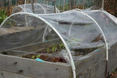 Random Acts of Gardening: Starting Your Edibles Early: Get Going with a Cloche or Cold Frame