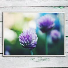 Flower picture wall art purple nature floral wall paper