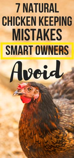 Natural Chicken Keeping Mistakes New Owners Make