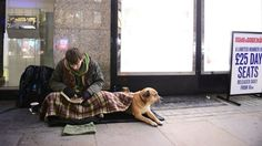 Homelessness more widespread than official figures show, charities warn - BBC News Welfare State, Social Policy, Bbc News, Charity, Dogs, Animals, Animales, Animaux, Pet Dogs