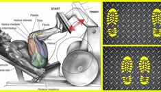 How to Change Leg Press Foot Variations for Total Leg Training ?The legs are a large muscle group that gets worked constantly throughout the day and therefore needs to be targeted with different exercises and lots of volume in order to grow Leg Workouts For Men, Workout Plan For Women, Chest Workouts, Weight Workouts, Body Workouts, Workout Women, Band Workout, Biceps Workout, Bodybuilder