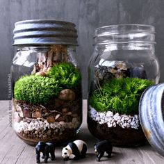Our Bio-Bowl Forest World Terrarium brings a natural element to your home or office setting. Find a hand arranged gift terrarium at the Apollo Box. Mason Jar Terrarium, Mason Jars, Terrarium Plants, Succulent Terrarium, Mason Jar Plants, Turtle Terrarium, Glass Jars, Ideas Florero, Jar Design