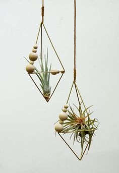 Counting Frame Himmeli Air Plant Tillandsia by theZenSucculent