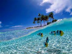 Bunaken Island, #PINdonesia