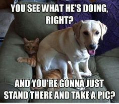 Haha what my dog and cat say too lmao