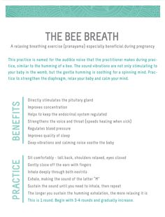 the bee breath - pranayama : wholehearter - prenatal yoga!