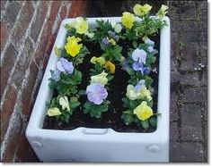 An old Belfast or butlers sink planted with pansies. They can also make small but attractive ponds.