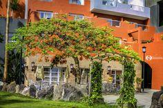Flamboyant... - Flamboyant tree Tenerife, Fruit, Teneriffe