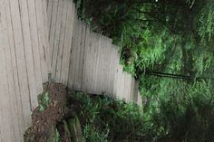 Forest path Vancouver BC!