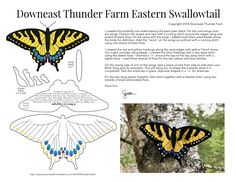 Eastern Swallowtail Butterfly from Downeast Thunder Farm
