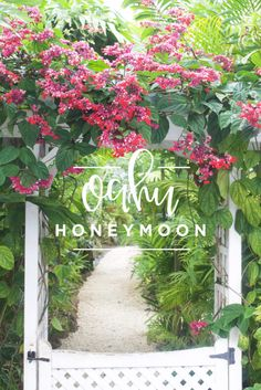 Our Oahu Honeymoon on a budget! Click through to see details of our honeymoon in Oahu Hawaii! - Chalkfulloflove