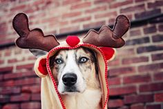 antlers    We love the dog costumes. Every dog should have the chance to dress up this C...