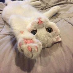 cats and kittens Cute Kittens, Cats And Kittens, Kitty Cats, Cute Baby Animals, Funny Animals, Gatos Cats, Tier Fotos, Baby Cats, Beautiful Cats