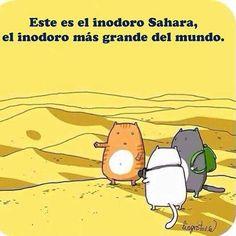 Os presento el arenero para #gatos más grande del mundo. #chistegatuno #catlogic #catlover #ilovecats