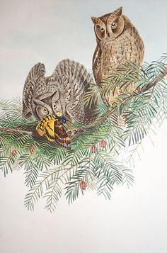 Owls-015.jpg (592×896)