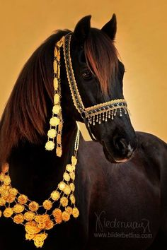 Liver chesnut Arabian. © Bettina Niedermayr