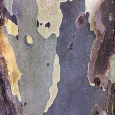 Sycamore tree bark with faces. image: Finest Hour Vintage