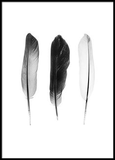 Black and white feathers poster in group poster / size .- Black and white feathers Poster in der Gruppe Poster / Größen und Formate / Black and white feathers poster in the group Poster / sizes and formats / at Desenio AB - Black And White Picture Wall, Black And White Posters, Black And White Prints, Black And White Painting, Black And White Aesthetic, Black And White Pictures, Black And White Background, Black And White Wallpaper, Black White Art