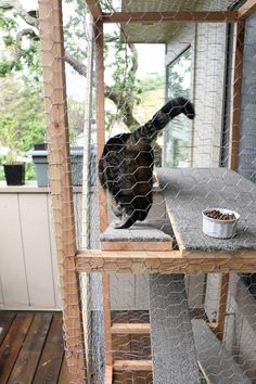 This cat enclosure is 6 ft. tall, has carpeted walkways and is covered with this chicken wire, so that Tabs can survey his surroundings. The wood beams are 2 in. x 2 in. pine boards.