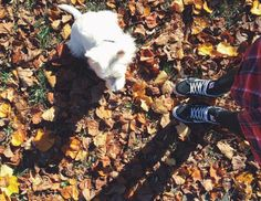 Savoring the beautiful weather with this fluffy guy 🐶 #fwisfeed