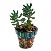 southeastsucculents.com, mosaic, succulent potted plant