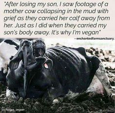 I find this heart wrenching, both as a mother and a human. A mothers torturous, agonizing pain. This is why I'm VEGAN. DP