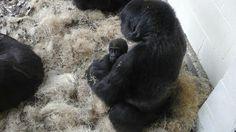 Kansas City Zoo, Animals, Animales, Animaux, Animal, Animais