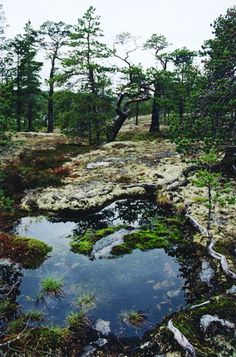 Panoramio - Photos by olouri