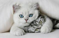 Beautiful-Animals-Love-Photography-15