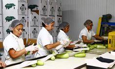 Empresas de India interesadas en ampliar comercio con Honduras Empresas nacionales presentarán su oferta en productos agrícolas y otros.