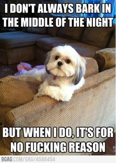 The most interesting dog in the world. Remove that right eye and you have my little Chewy dog! Shih Tzus, Best Funny Pictures, Dog Pictures, Animal Memes, Funny Animals, Cute Animals, Funny Dog Memes, Funny Dogs, Claws