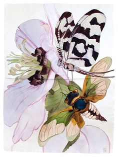 Sarah Graham, artist, botanical works on paper, 2008 to present. Botanical Drawings, Botanical Illustration, Botanical Art, Illustration Art, Illustrations, Butterfly Illustration, Painting Inspiration, Art Inspo, Insect Art