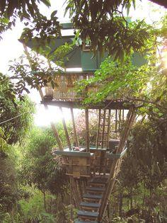 Puerto Rico, tropical treehouse vacation rental