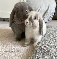 rabbit care for bunny - rabbit care guides facts - Cute Little Animals, Cute Funny Animals, Cute Dogs, Funny Animal Memes, Funny Animal Videos, Rabbit Facts, Pet Rabbit, House Rabbit, Indoor Rabbit