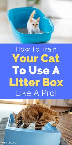 Discover simple tips to help you train your kitty to use a litter box. Plus, what is the best cat litter to use, and lots more. #litterboxtrainingcats #catlitterboxtraining #cattraining #catlittertraining Paper Cat Litter, Litter Box, Best Cat Litter, Outdoor Cat Enclosure, Cat Care Tips, Cat Garden, Outdoor Cats, Feral Cats