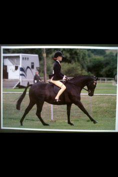 Claude 14.2 show pony