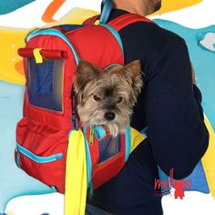 NUEVO Diseño  𝕄𝕒𝕝𝕖𝕥𝕒  𝕖𝕟  𝕔𝕠𝕝𝕠𝕣 𝕣𝕠𝕛𝕠 . Pequeña y mediana  . Encuéntrala en nuestra tienda virtual  𝘄𝘄𝘄.𝗺𝗲𝗹𝗹𝗼𝘄𝗳𝗼𝗿𝗽𝗲𝘁𝘀.𝗰𝗼𝗺 #maletaparaperros Yorkie, Twitter, Photos, Tents, Red, Colors, Yorkies, Pictures, Yorkshire Terrier