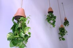 Hanging plants @ABCyou Bed&Breakfast Valencia Bed&Breakfast Valencia