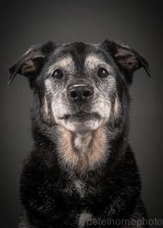 "Photographer Pete Thorne's ""Old Faithful"" series celebrates elderly dogs."