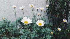 Daisy 🌼🌼