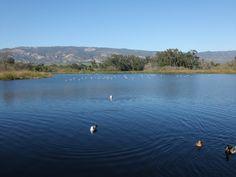 Who wants to power walk with me at Lake Los Carneros, SB, CA?