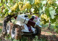 Robot farmers are the future of agriculture, says government. UK farming conference hears how 'farmbots' will bring efficiencies and benefits and an end to back-breaking tasks Arduino, Grape Picking, Burgundy Walls, Farming Technology, Autonomous Robots, Mobile Robot, Industrial Robots, Industrial Design, Robotics Engineering