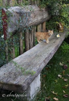 cat on a rustic bench