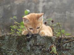 Co zrobić ze znalezionym kotem?