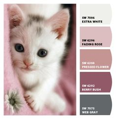 Paint colors from Chip It! by Sherwin-Williamsj Sherwin Paint, Cat Colors, Colours, Color Combinations, Color Schemes, Sherwin Williams Color Palette, Painting Corner, Color Charts, Aesthetic Colors