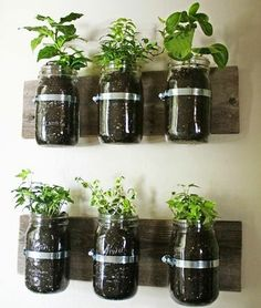 I think the rustic, charming look of the exposed dirt is a great idea for these herb planters. Plus, using a wall (as opposed to a table or windowsill) gives you more flexibility in the number of herbs you can grow inside.